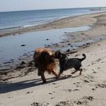 Und obwohl die Lütte mir ordentlich zusetzte, war es ein Riesenspaß mit ihr gemeinsam am Strand zu laufen!