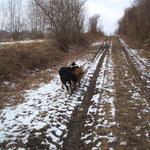"""Das ist der """"dorfeigene Hundeweg"""" (natürlich außerhalb vom Dorf ;-))"""
