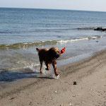 """Meinen Lieblingskong haben wir """"ausnahmsweise"""" mal nicht dem Meer geschenkt, sondern wieder mit nach Hause genommen ;-)"""