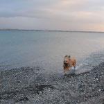 Strandspurt