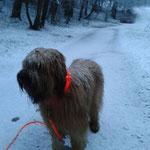 zwei Tage später: Schneetour bei Morgendämmerung