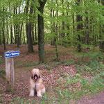am Waldrand - kurz vor dem Verlassen des Waldes
