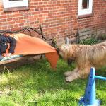 Frauchen, aufstehen - genug Pause gemacht! Laß uns endlich mit dem Gartentraining beginnen!!!