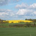 während Frauchen ihren Blick über die Felder schweifen läßt...