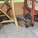 ...sind wir Welpis einfach umgefallen & eingeschlafen.