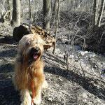 ich am Bergbach im Wald
