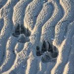 meine Spuren im Sand...