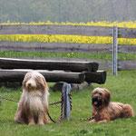 Deelayla mit ihren beiden Beardis
