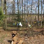 Der Osterbaum des Waldkindergartens.