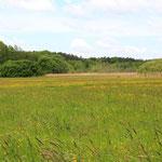 bunt blühende Oderwiesen