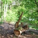 langsam fällt`s auf: Frauchen steht auch auf Totholz :-)