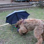 Den Schirm finde ich echt unheimlich...