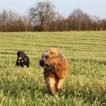 Aber am Nachmittag -welch Freude- gab es viel Freilauf mit Lotte!!!