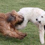 Na wenn Du meinst: dann behandel ich Dich halt wie ein Schaf => Knuff!!! (die Farbe stimmt ja schon mal ;-))