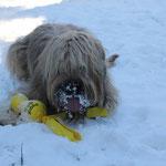 Schneefutterpause
