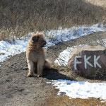 """Ich zieh mir jedenfalls nicht für PETA meinen """"Pelz"""" aus ;-))"""