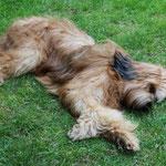 ...Schlafen niederzulassen - was für ein geniales Hundeleben