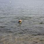 auch als Seehund mache ich eine gute Figur ;-))