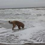 bah - dat Ostseewasser schmeckt immer noch nicht