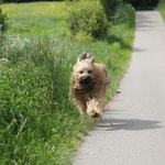 ich bin so schnell wie der Wind!