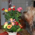 Wie ja bereits bekannt ist: ich bin ein Blumenkind ;-)) aahhh... das sind Rosen...
