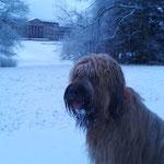 schneefutternder Yeti