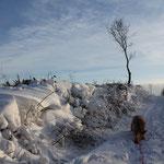 Der (oft stürmische) Wind hat den Schnee so wundervoll verwehen lassen!
