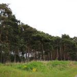 ein typischer Brandenburger Waldrand