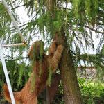 hej, komm wieder runter vom Baum! Ich will `ne Revanche!