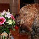 wow - wau - das sind die tollen Blumen von Ilka, meiner Patentante