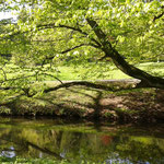 ...Frauchen liebt die grünende Frühlingsnatur