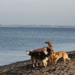 doch dann: Hundebegegnungen