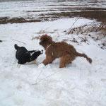 Lotta liebt Schnee genauso wie ich.