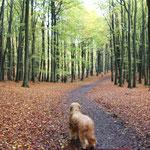...durch den Herbstwald...