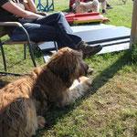 mein letztes Training auf dem Hundeplatz von D.O.G.S. in Handewitt