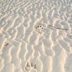 meine Spuren im Sand, die man gestern noch fand, hat die Flut mitgenommen...