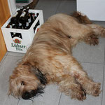ich habe das Bier wirklich nicht ausgetrunken!