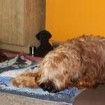 nach dem Strandausflug mussten wir Hundis beide erstmal `ne Runde schlafen