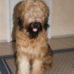 Wuschelhund - nach dem Bürsten & Kämmen