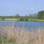 Torfsee Naturpark Nuthe-Nieplitz