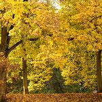 """2018-11-04 -  """"Bunter Herbst (7-16742)"""" - Mit dem Rad unterwegs im Herbst - Copyright by Franz Walter"""