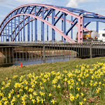 """2019-04-14 - """"Karl-Lehr-Brücke am RuhrtalRadweg in Duisburg (7-44162)"""" -  RADREVIER.RUHR - Copyright by Franz Walter"""