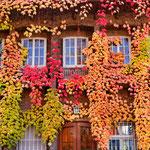 """2018-11-02 -  """"Bunter Herbst (7-16702)"""" - Mit dem Rad unterwegs im Herbst - Copyright by Franz Walter"""