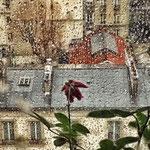 rose sous la pluie