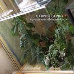 Das selbstgebaute Terrarium der Stabheuschrecken, geklebt mit transparentem Aquariensilikon.