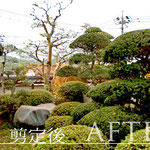 お庭の剪定(アフター)