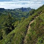 Schmaler Pfad entlang eines dicht bewachsenen Steilhangs
