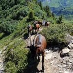 Die uns ein Stueck begleitenden Bergziegen liefern Milch für einen wohlschmeckenden Ziegenkaese