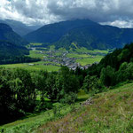 verkrautete Alpfläche