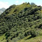 Der Portlakopf (1905 m) vom Suenser Weg. Am Gratruecken erfolgt der Aufstieg zum Gipfelkreuz.
